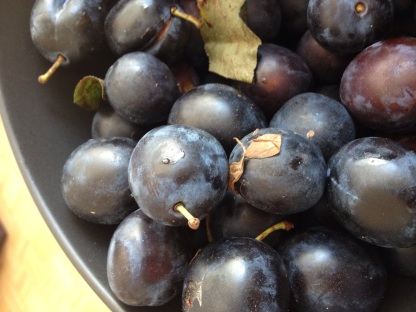 Damsons in Bowl